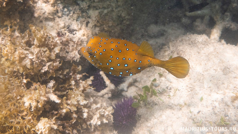 Опасные морские обитатели Маврикия