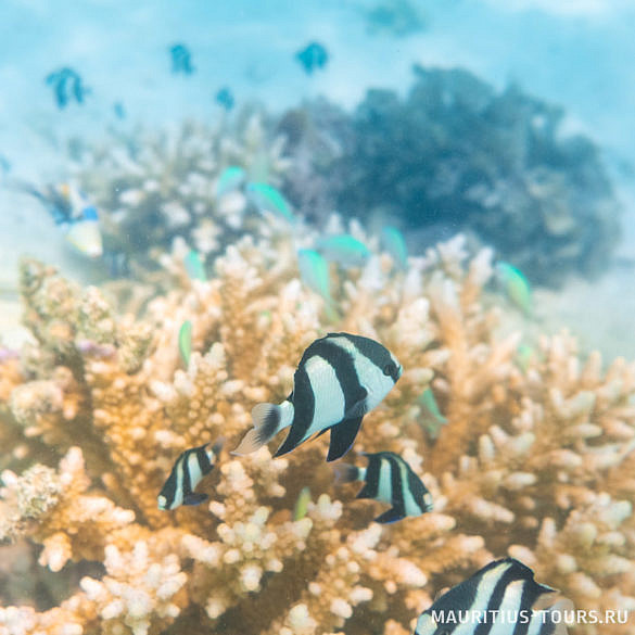Отзыв о Маврикии - сноркелинг на острове