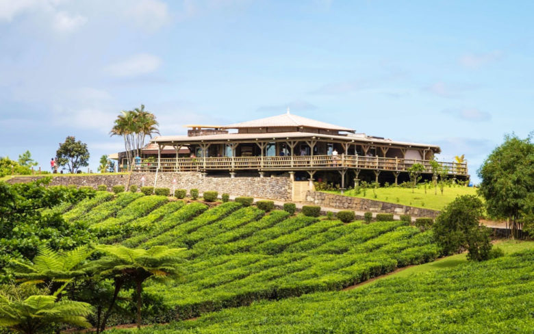Куда съездить на Маврикии - на чайную фабрику Bois Cheri