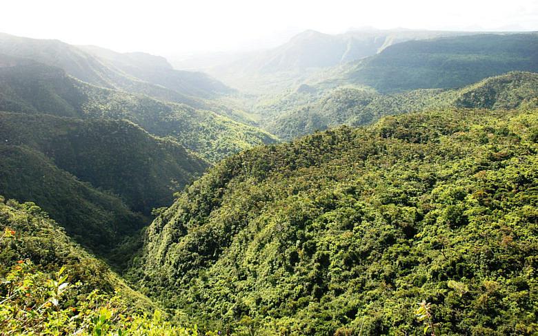 Black River Gorges - что посмотреть на Маврикии