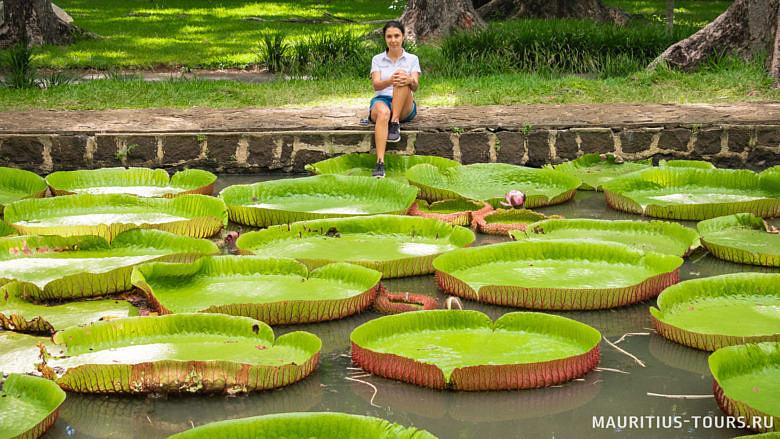 Сад Памплемус - что обязательно посмотреть на Маврикии
