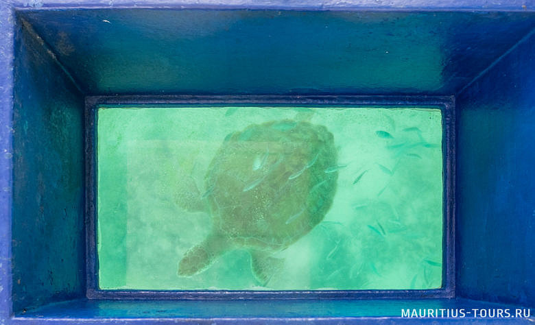Что можно увидеть в лодке со стеклянным дном