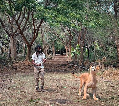 Как добраться в парк Казела на Маврикии