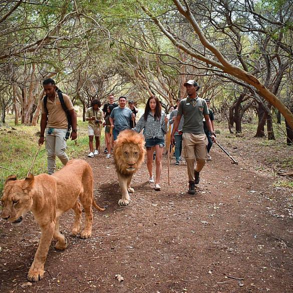 Отзывы о парке Casela на Маврикии