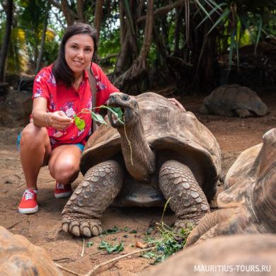 Где покормить гигантских черепах на Маврикии - парк Ла Ваниль