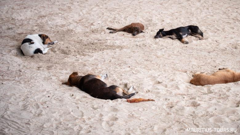 Собаки на пляже Гранд Бэй